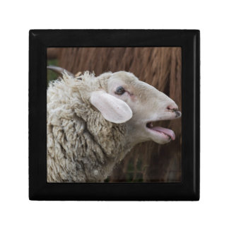 sheep on the farm gift box
