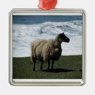 Sheep on wild remote south Devon Coastline Christmas Ornament