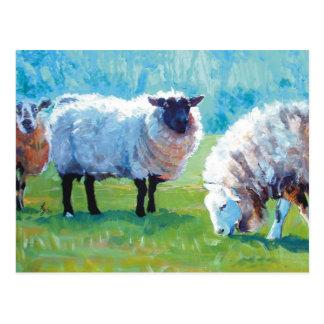 Sheep painting Summer light Postcard