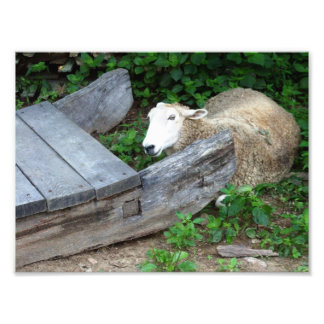 sheep photo art