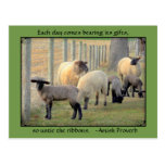 Sheep Postcard, Amish Proverb. Add your store