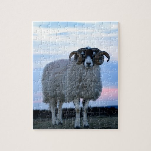 Sheep Puzzle/Jigsaw with Tin