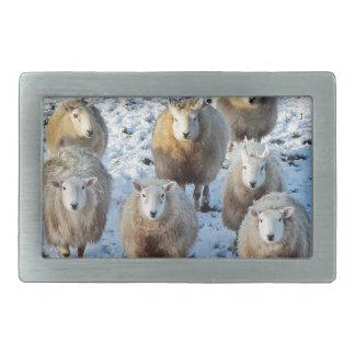 Sheep Rectangular Belt Buckles