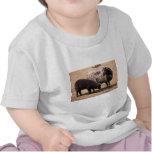 Sheep Shirts
