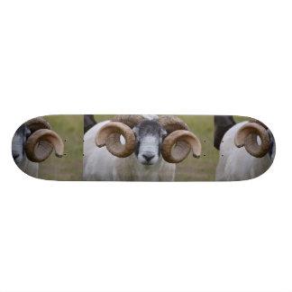 Sheep Skate Decks