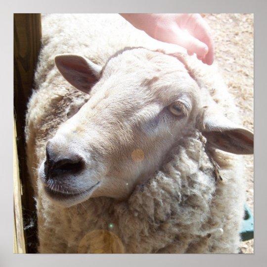 Sheep The Good Shepherd Christian Art photograph Poster