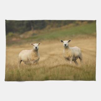 Sheep Towel