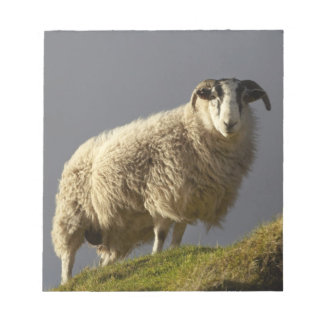 Sheep, Trotternish Peninsula, Isle of Skye, Notepads