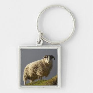 Sheep, Trotternish Peninsula, Isle of Skye, Silver-Colored Square Key Ring