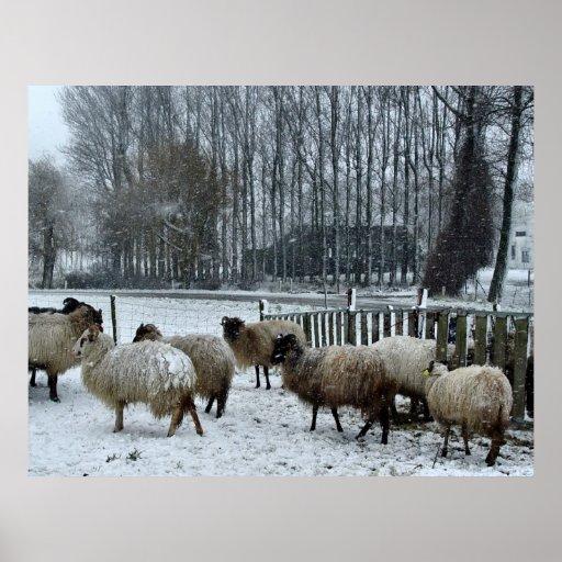 Sheep - Winter season Print