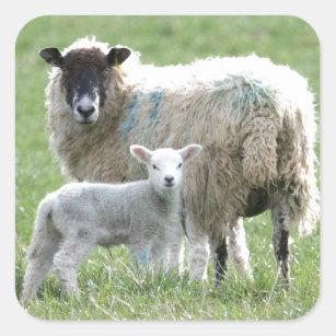Sheep Stickers Amp Labels Zazzle Uk