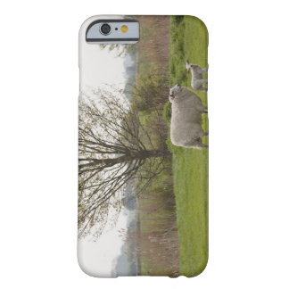Sheep with lamb in field barely there iPhone 6 case