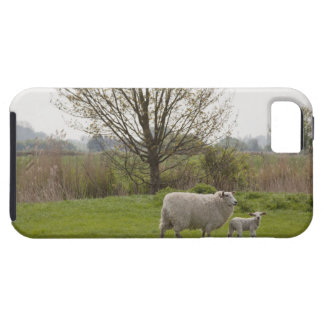 Sheep with lamb in field case for the iPhone 5