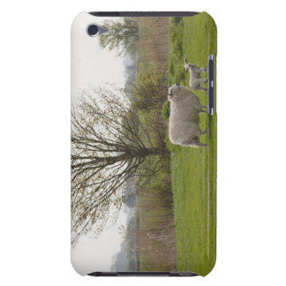 Sheep with lamb in field Case-Mate iPod touch case