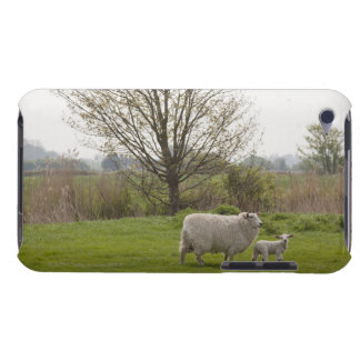 Sheep with lamb in field iPod touch case