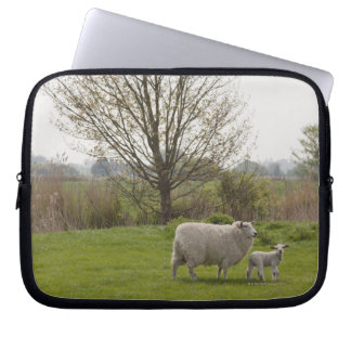 Sheep with lamb in field laptop sleeve