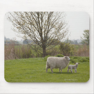 Sheep with lamb in field mouse pad