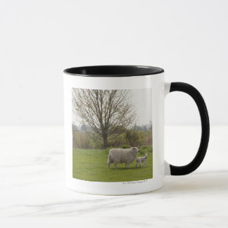 Sheep with lamb in field mug