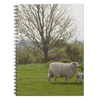 Sheep with lamb in field spiral notebook