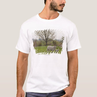 Sheep with lamb in field T-Shirt
