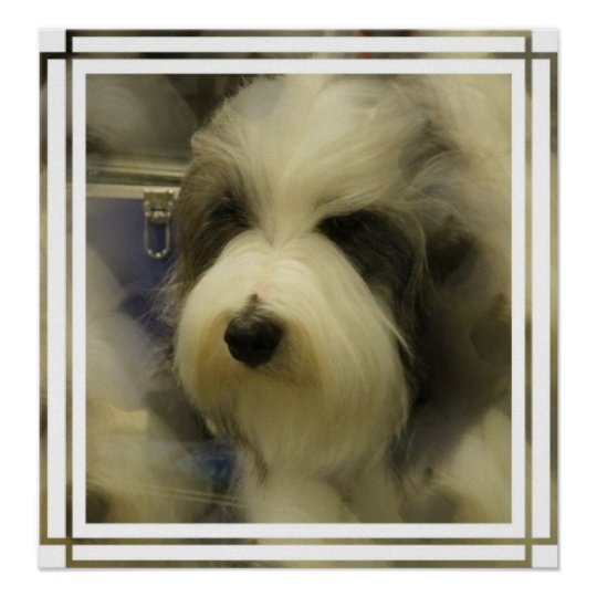 Sheepdog Picture Print