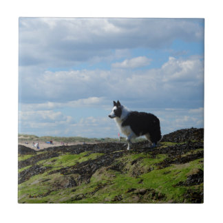 Sheepdog Ready on Rocks Tile