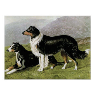 """Sheepdogs"" Vintage Dog Illustration Poster"