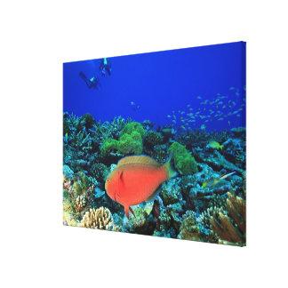 Sheephead Parrotfish Scarus Canvas Print