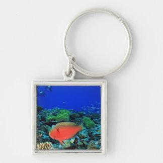 Sheephead Parrotfish Scarus Key Ring