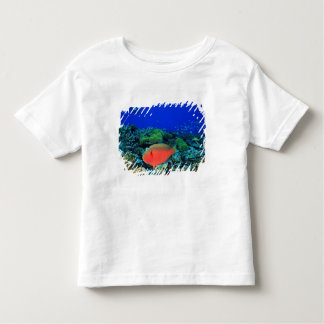 Sheephead Parrotfish Scarus Toddler T-Shirt