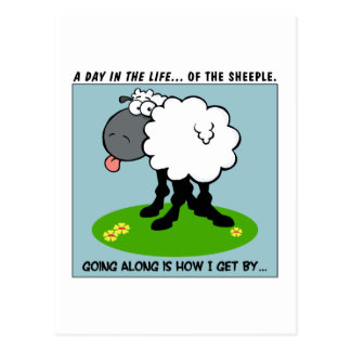 Sheeple are Smarter Than You Think Postcard