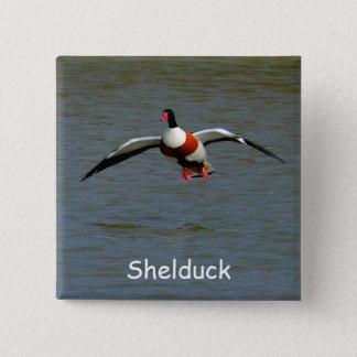 Shelduck 15 Cm Square Badge