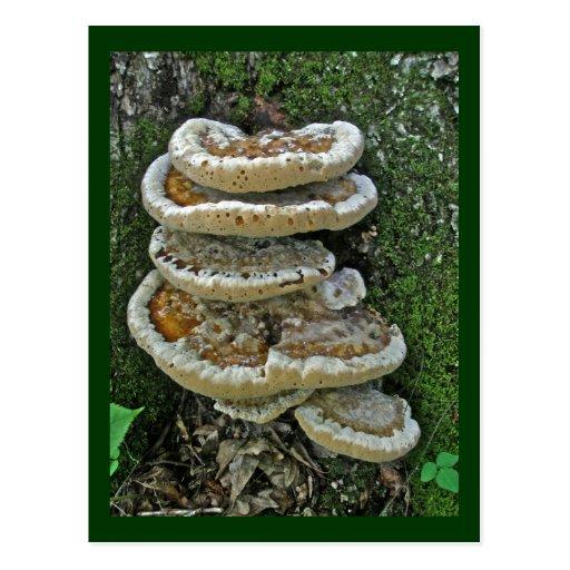 Shelf Fungi on Stump Post Cards