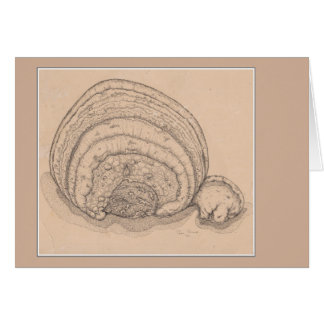 Shelf fungus pen and ink drawing greeting card