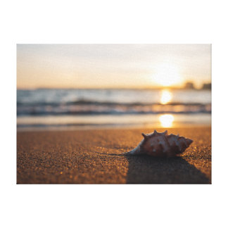 Shell at Sunset on Beach Canvas Print