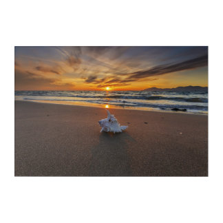Shell At The Beach At Sunset | Kos Island Acrylic Wall Art