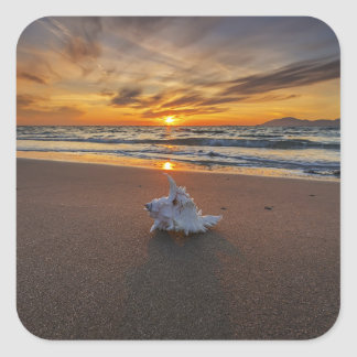 Shell At The Beach At Sunset | Kos Island Square Sticker