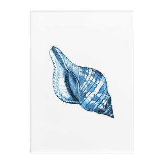 Shell blue coastal nautical watercolor acrylic print