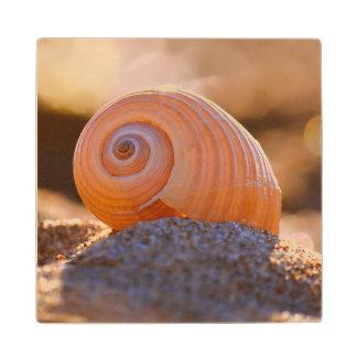 Shell Bokeh |Greece Wood Coaster