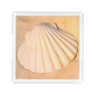 Shell Laying In Sand Acrylic Tray