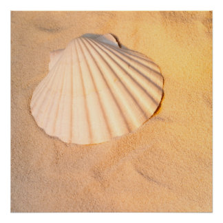 Shell Laying In Sand Poster