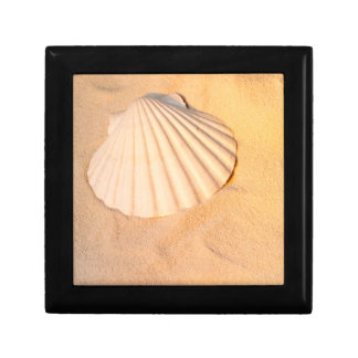 Shell Laying In Sand Small Square Gift Box