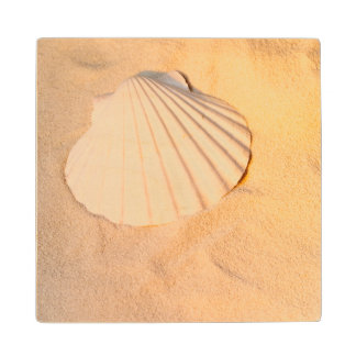 Shell Laying In Sand Wood Coaster