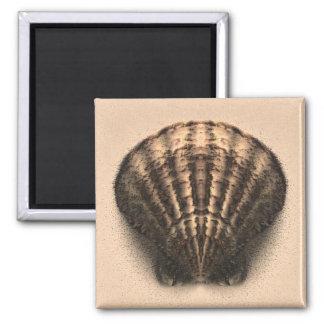 Shell Magnet