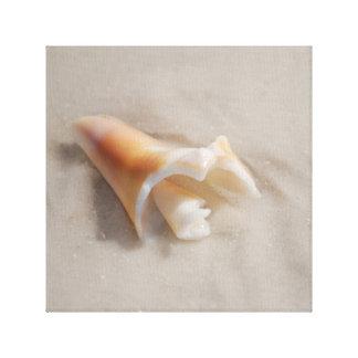 Shell on beach canvas prints