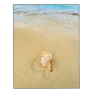 Shell On Beach | Jamaica