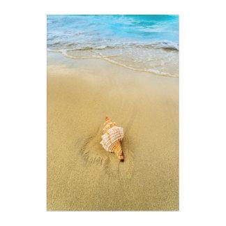 Shell On Beach | Jamaica Acrylic Print