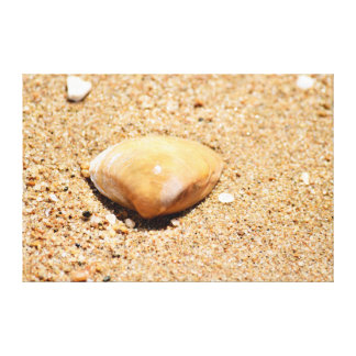 SHELL ON BEACH QUEENSLAND AUSTRALIA CANVAS PRINT