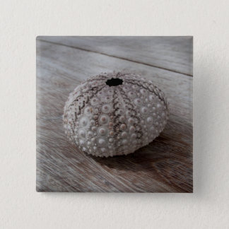Shell On Top Of A Wooden Table 15 Cm Square Badge