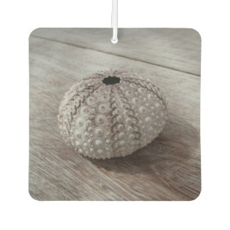 Shell On Top Of A Wooden Table Car Air Freshener